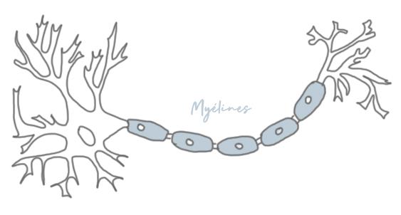 Myéline