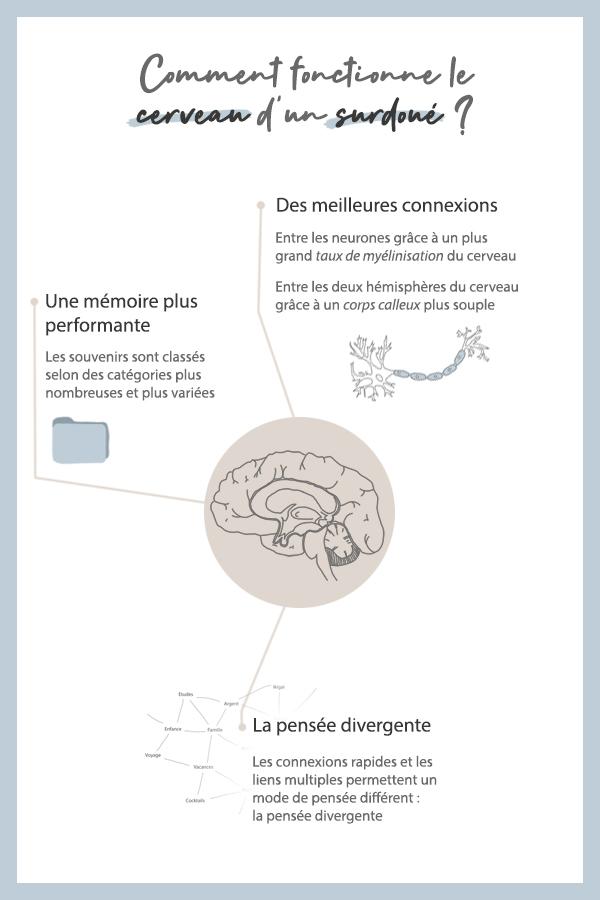 Fonctionnement du cerveau surdoué