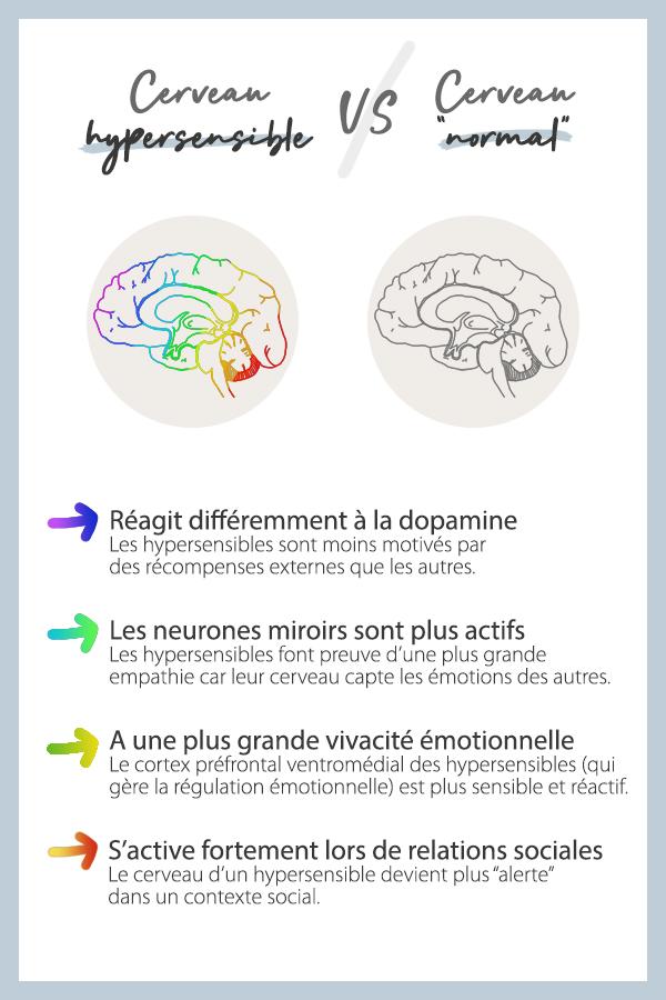 Différence entre un cerveau hypersensible et un cerveau normal