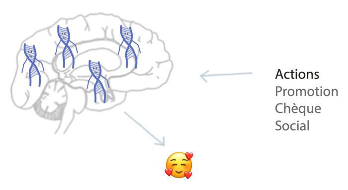 Circuit de la récompense dopamine