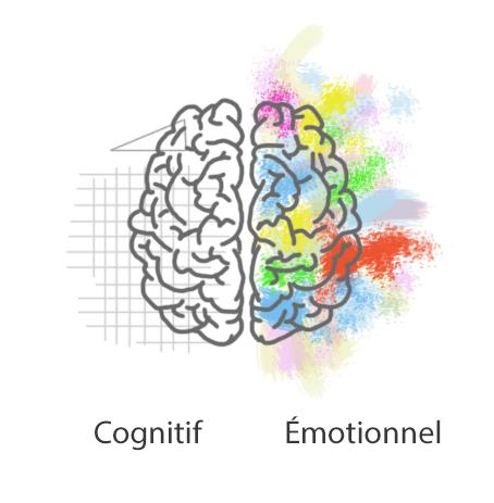 Cerveau cognitif vs cerveau émotionnel