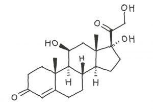 A quoi ressemble le cortisol ?